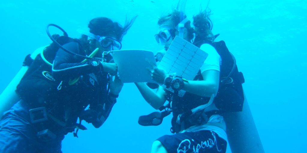 Volunteer in Mexico on a diving conservation program