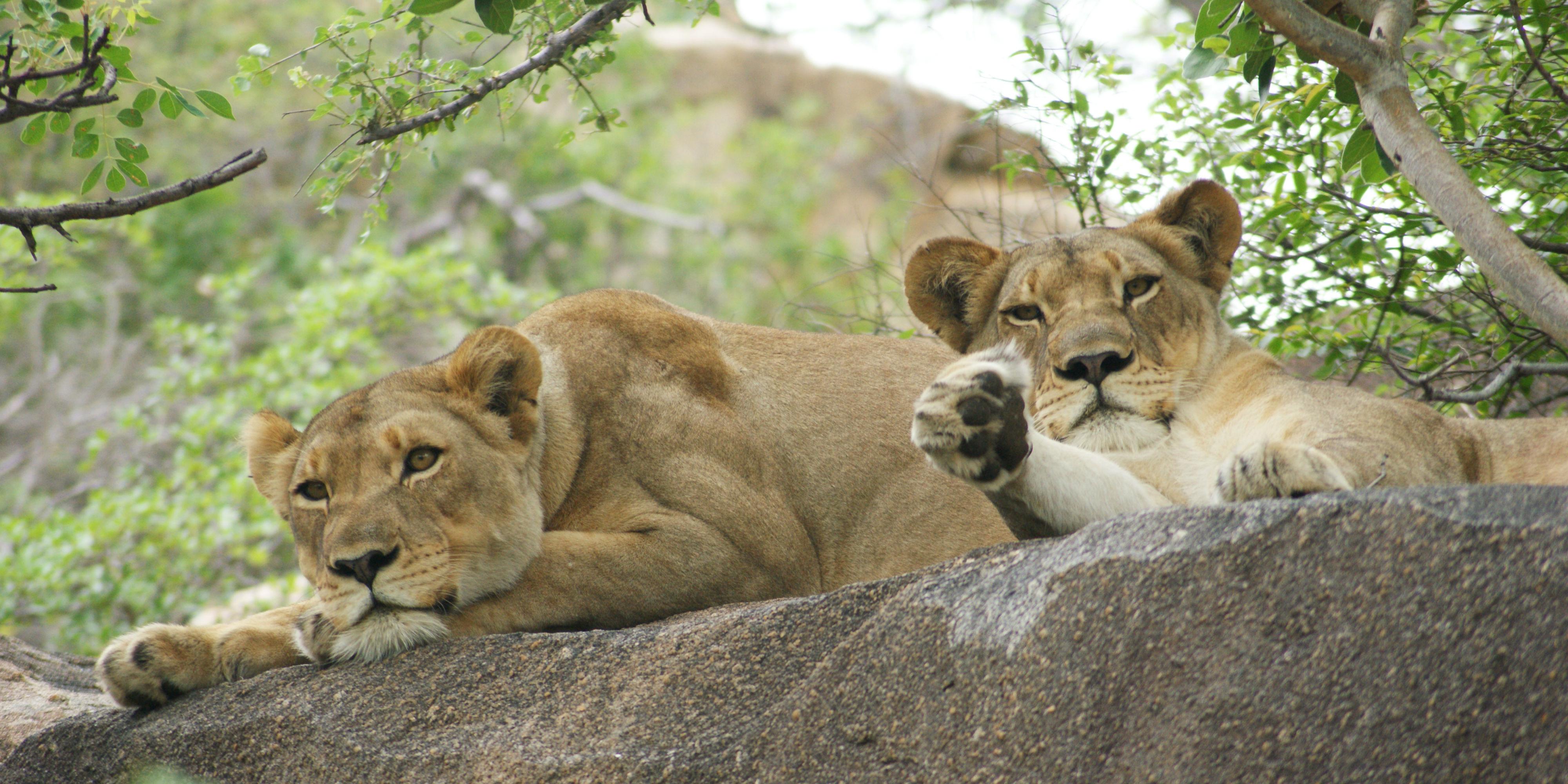 wildlife conservation internships