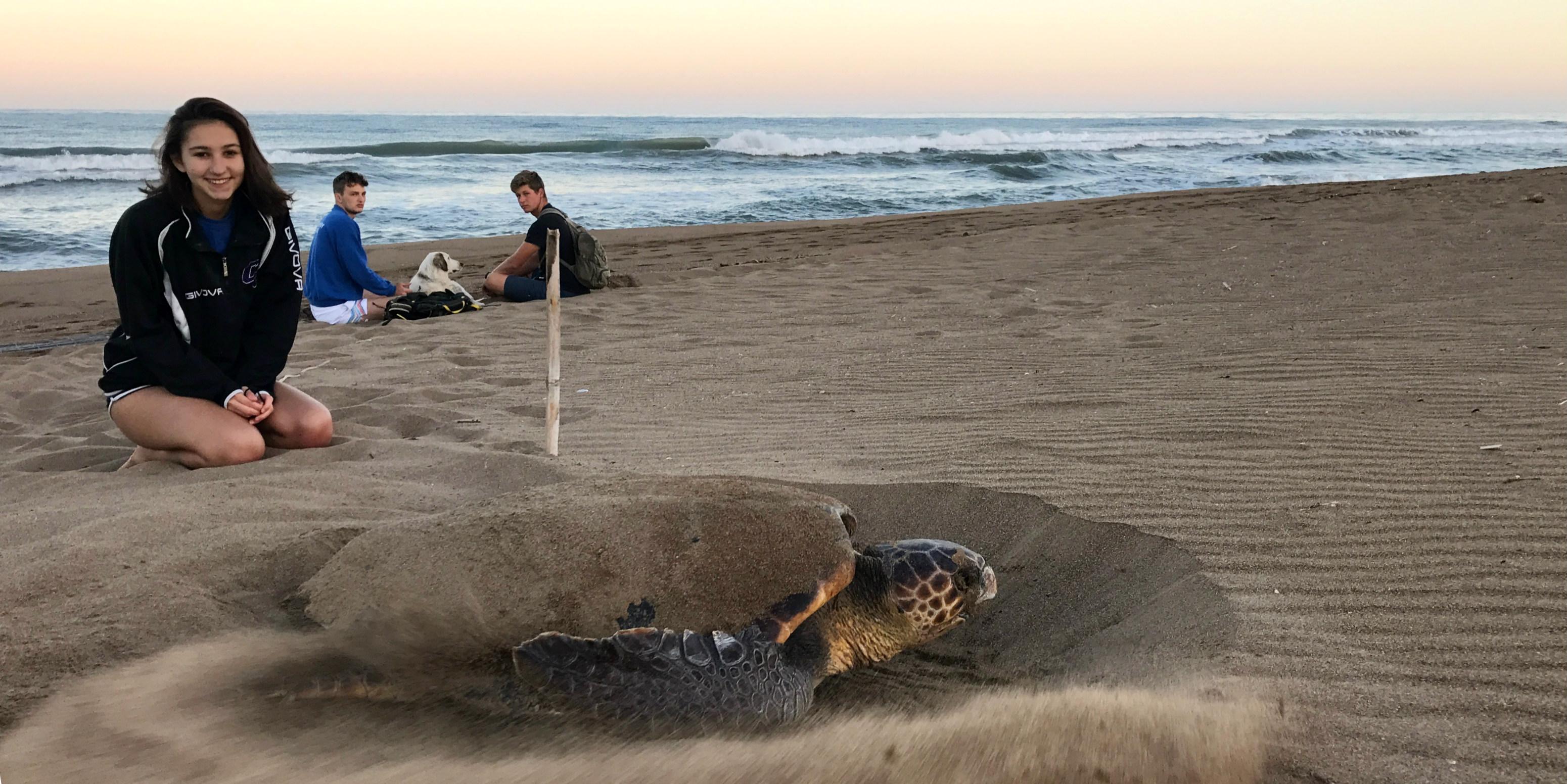 loggerhead turtle nesting