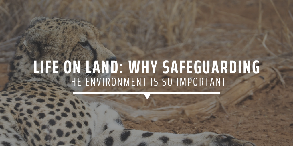 Life on land: why safeguarding the environment is important