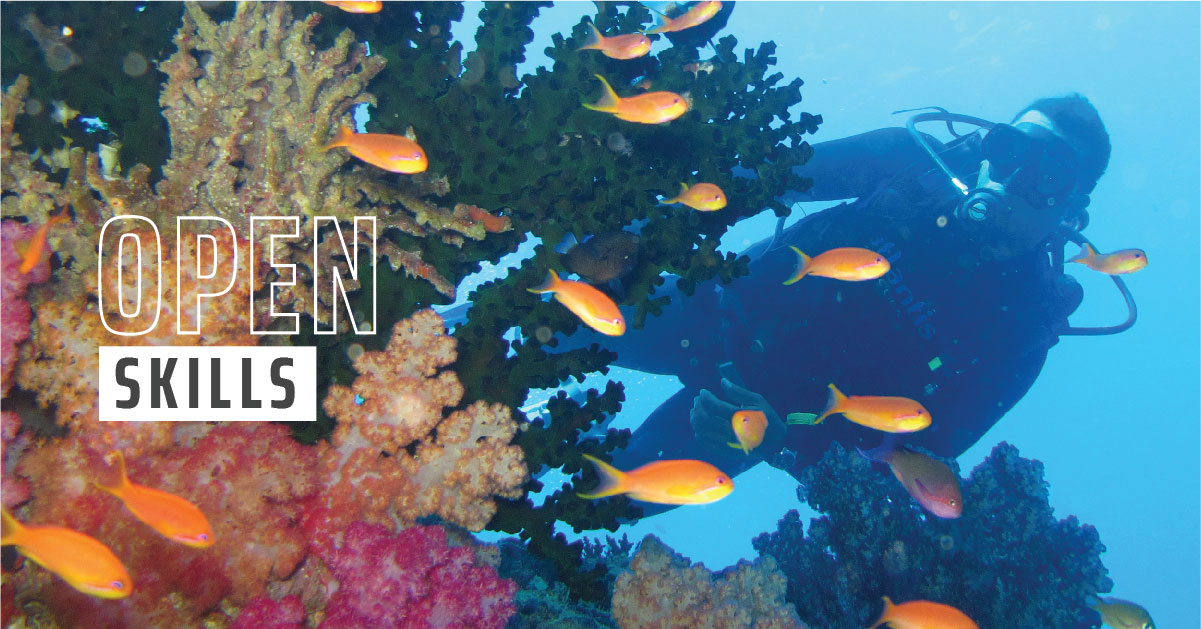 A diver swimming past coral while observing orange fish.