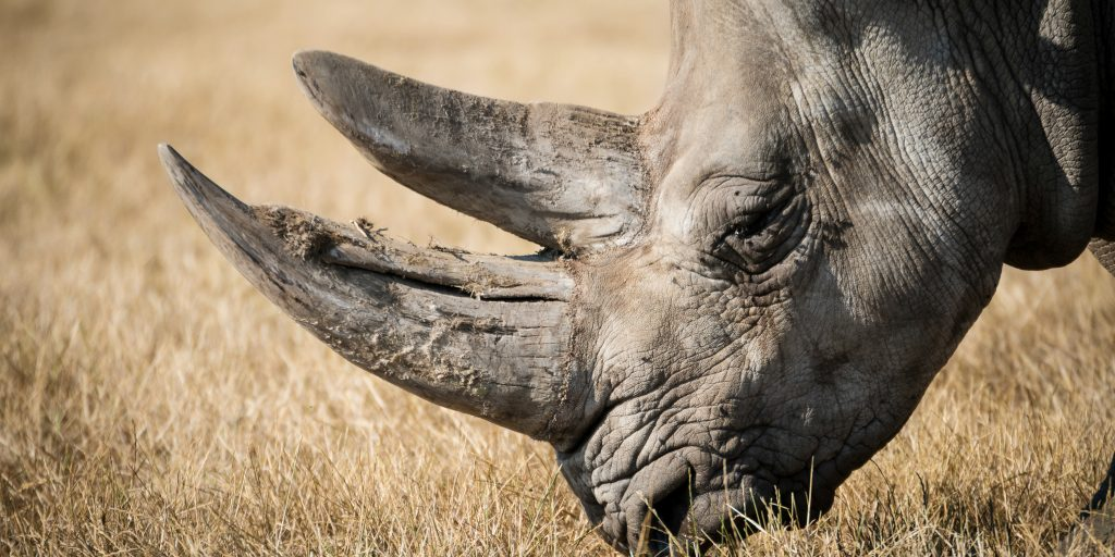 Rhino's can be protected if you join a wildlife conservation program.
