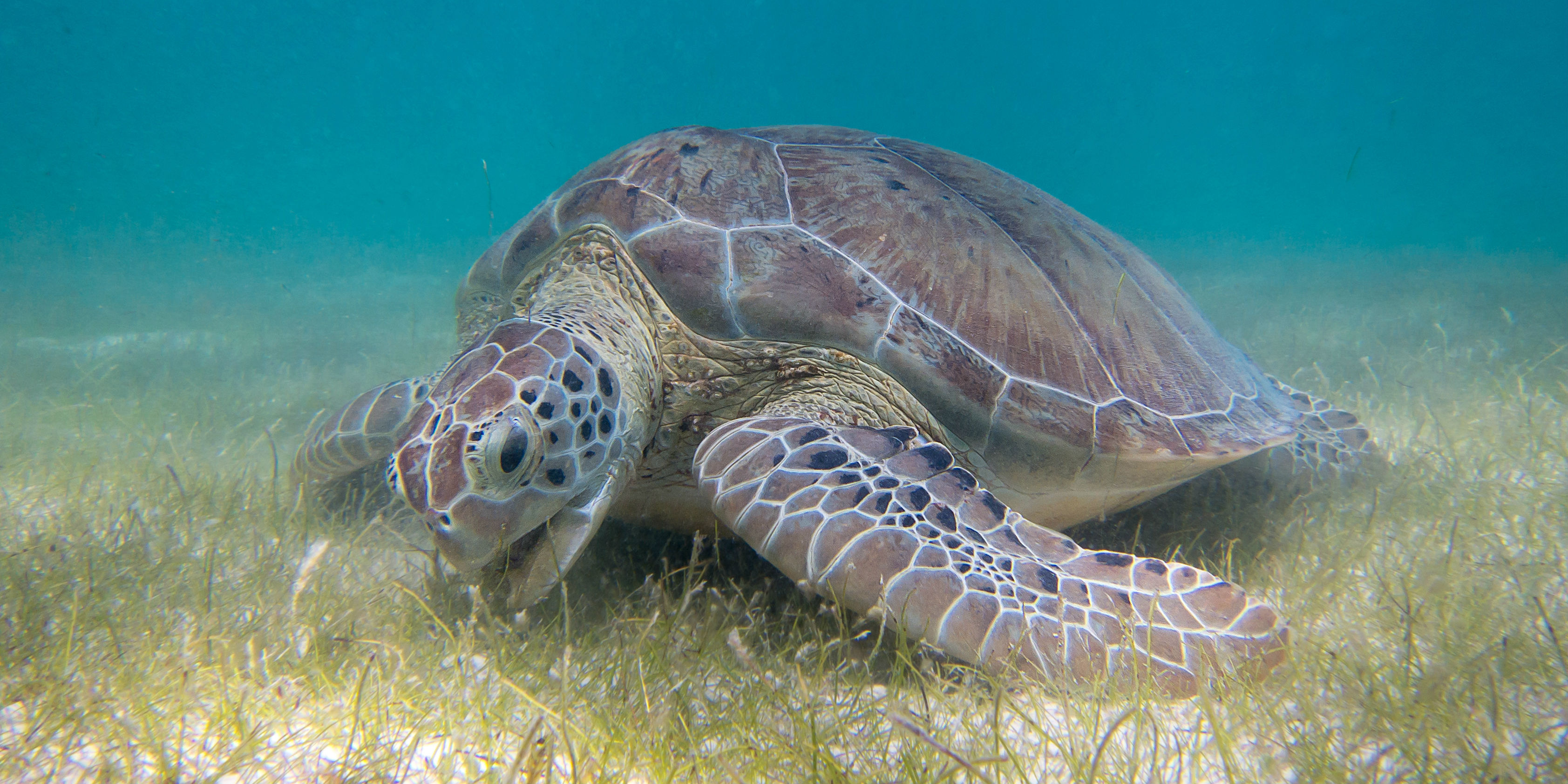 The importance of seagrass