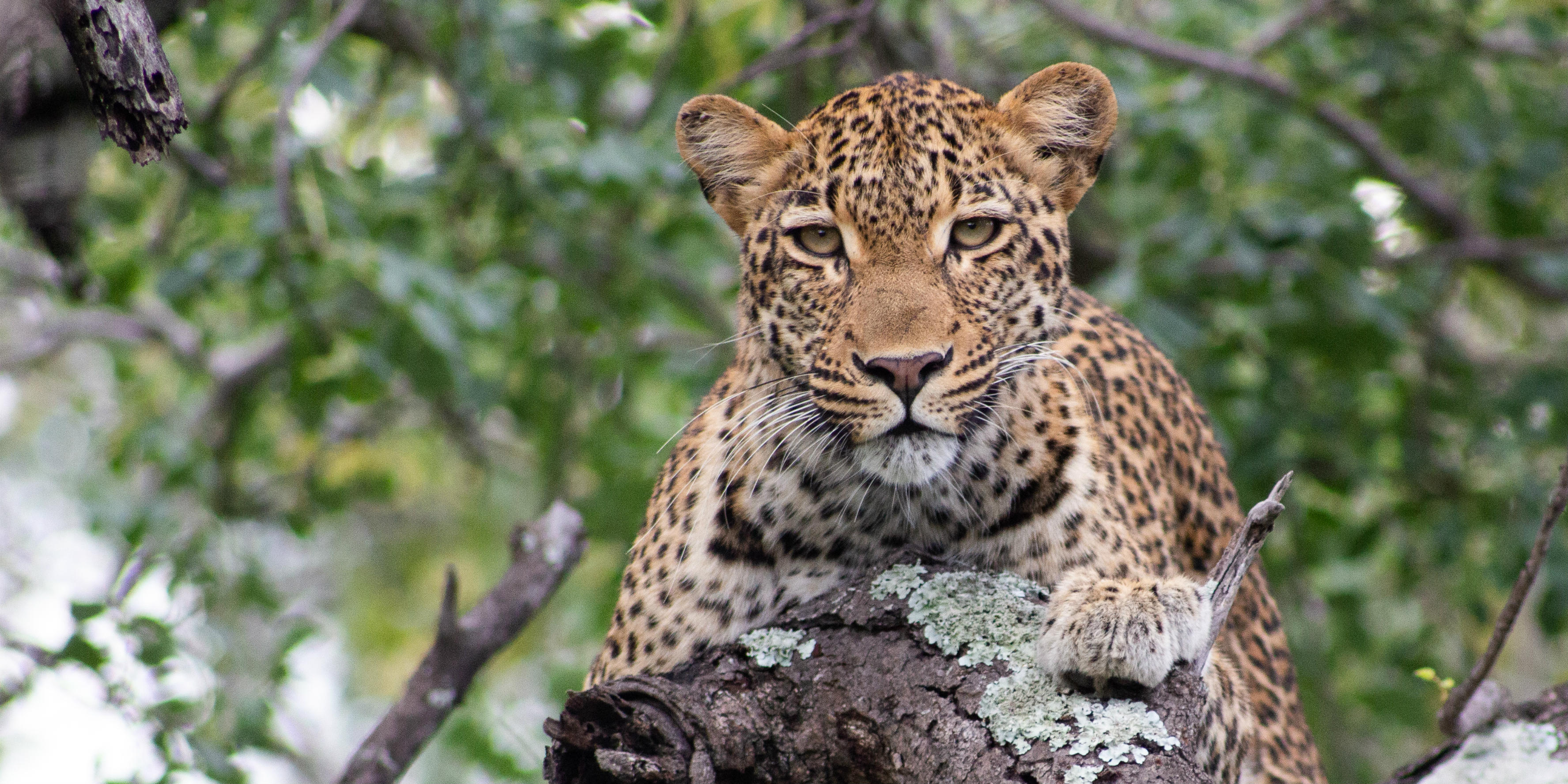 conservation projects in south africa