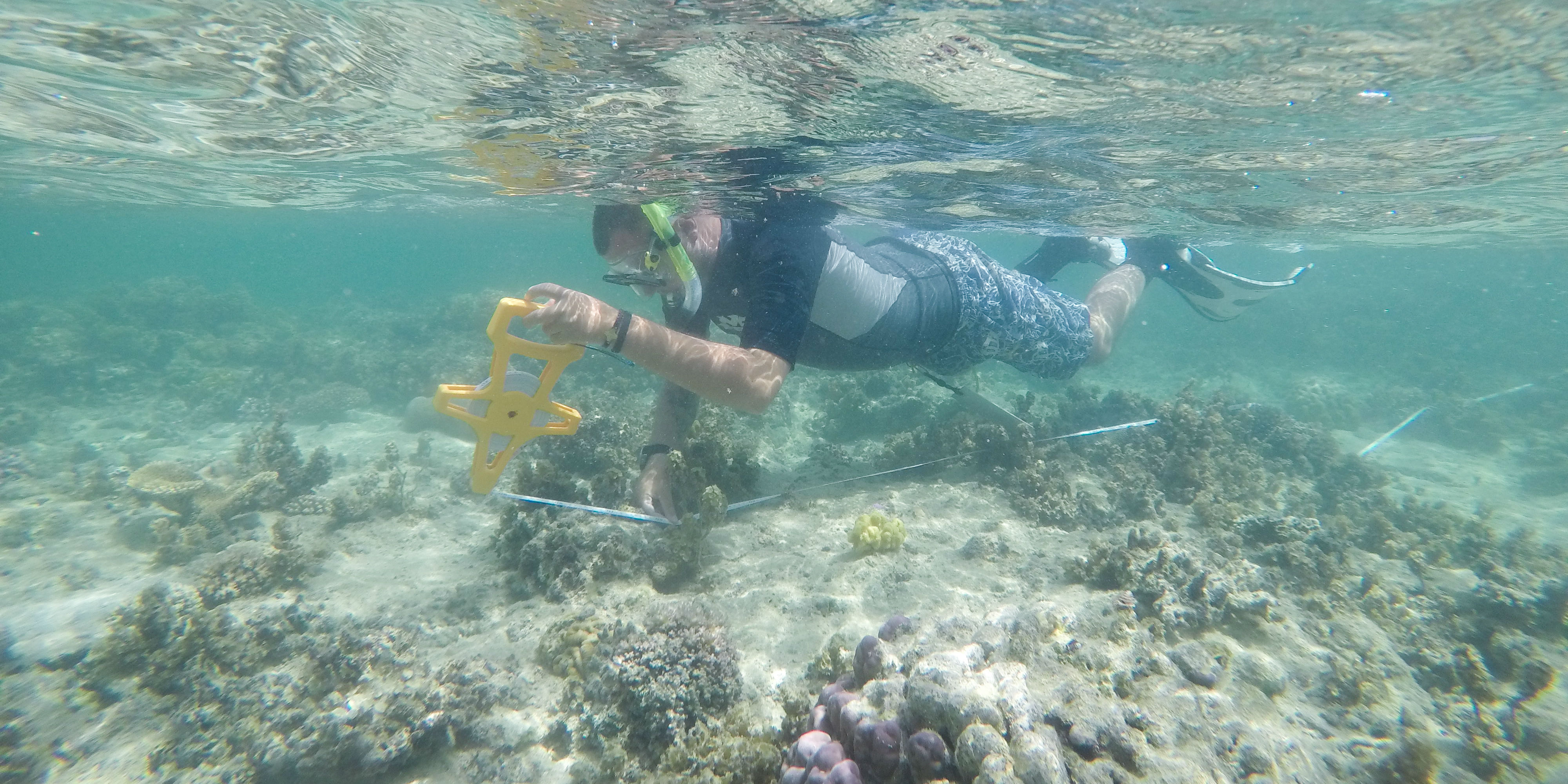 A GVI participant monitors a coral reef in Fiji, after learning to scuba dive.