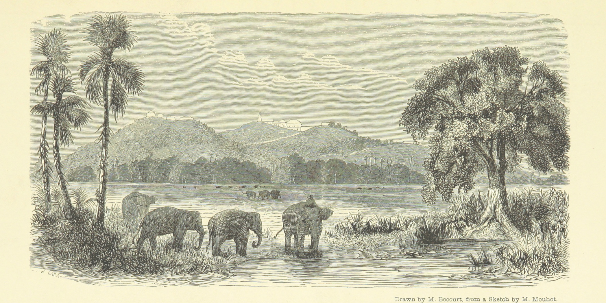 An illustration of elephants in Thailand in the 19th century. There is a rider on the back of the first elephant.