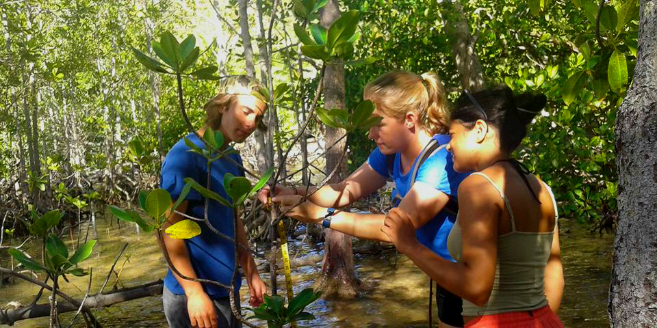 GVI participants monitor mangrove growth while volunteering in Seychelles.