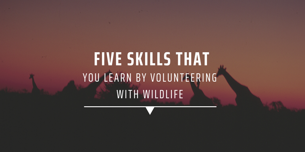 Five skills that you learn by volunteering with wildlife
