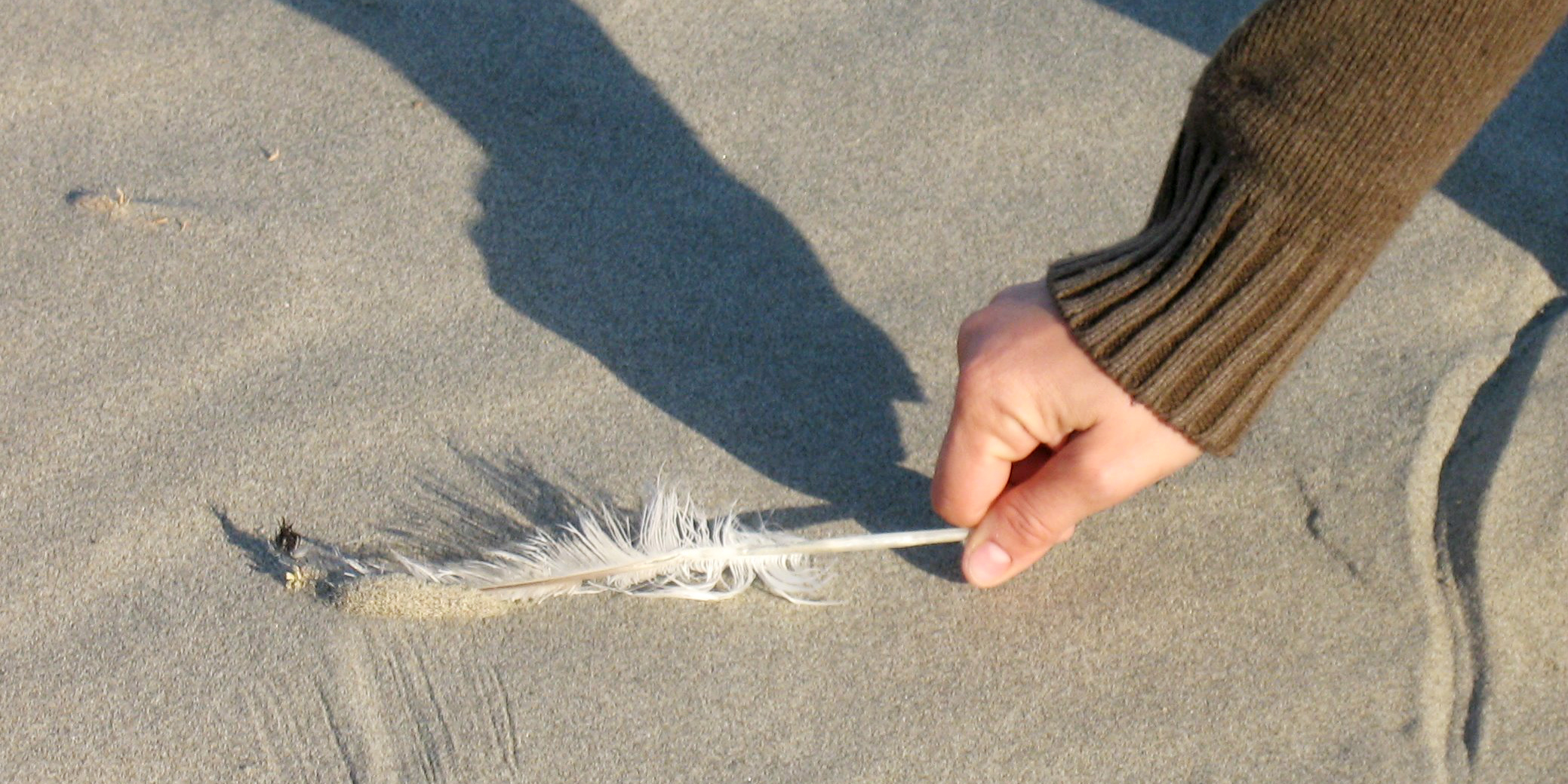 An individual bends down to collect a feather off of a beach | sustainable travel tips