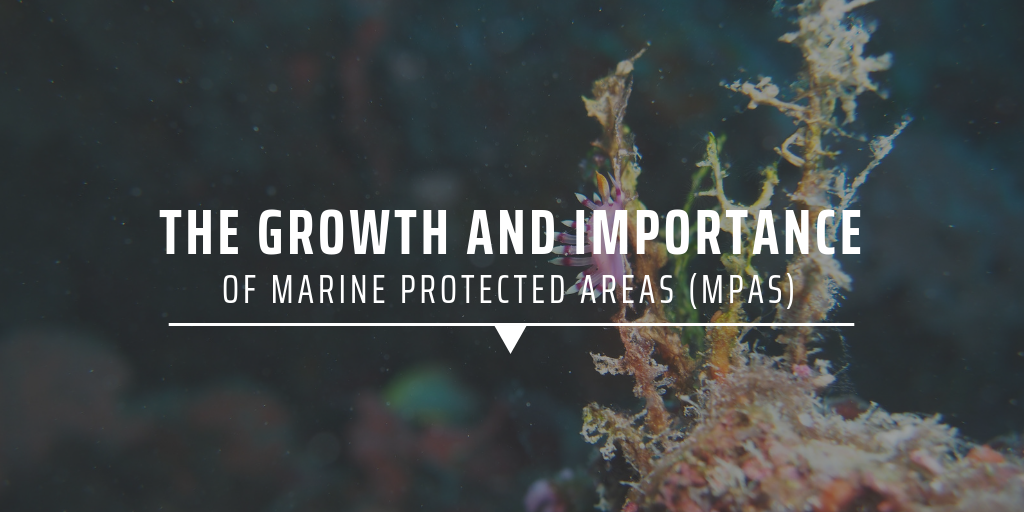 The growth and importance of Marine Protected Areas (MPAs) and relating volunteer opportunities