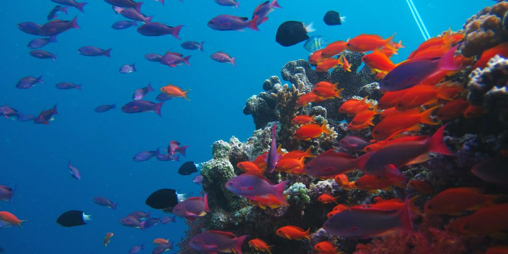 Ocean Conservation is crucial to number 14 of the UN Sustainable Development Goals and to protect life in the oceans.