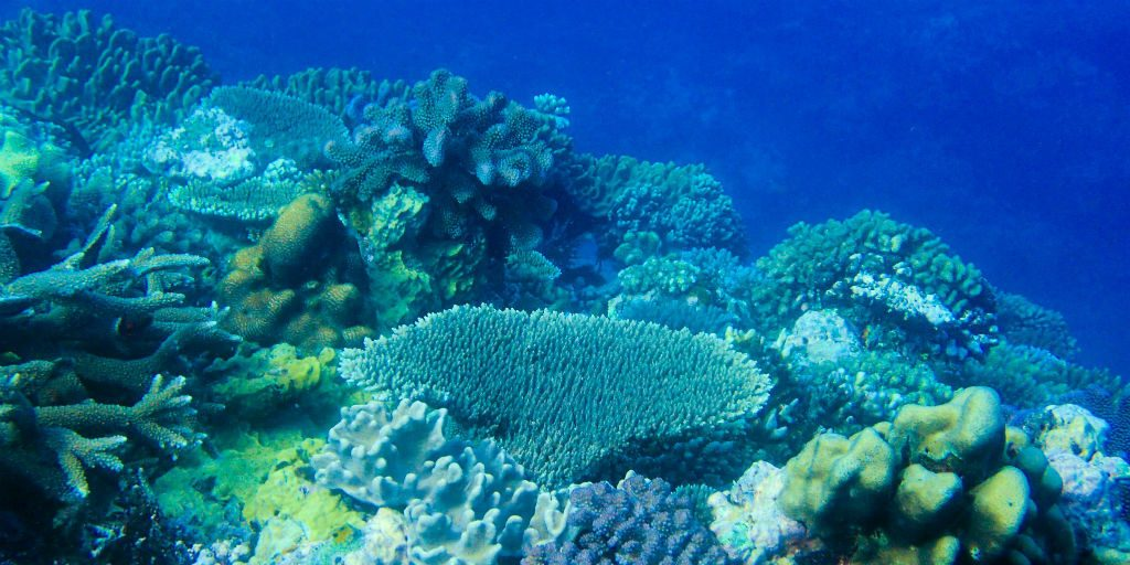 Experience the best snorkeling in Fiji on a GVI volunteering program at our base in Caqalai.