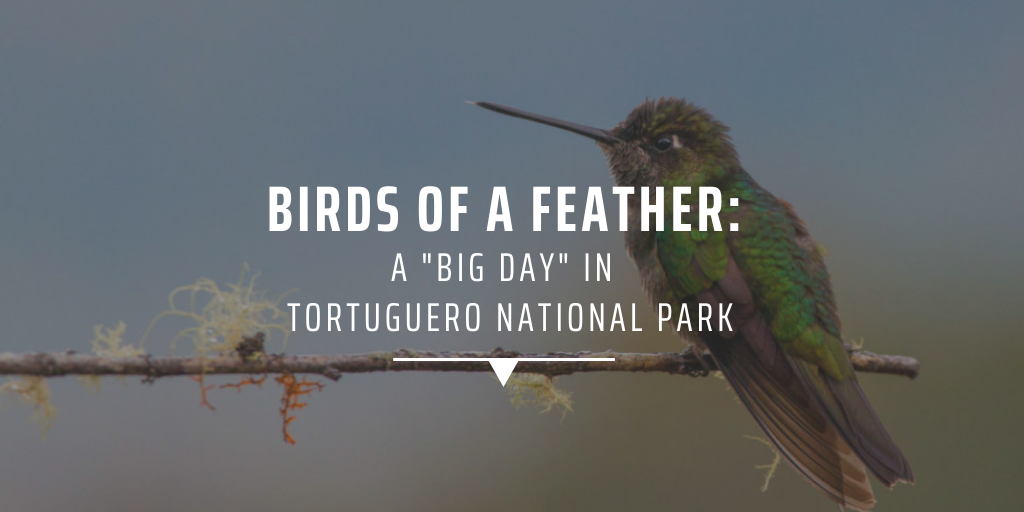 """Birds of a feather: a """"big day"""" in Tortuguero National Park"""
