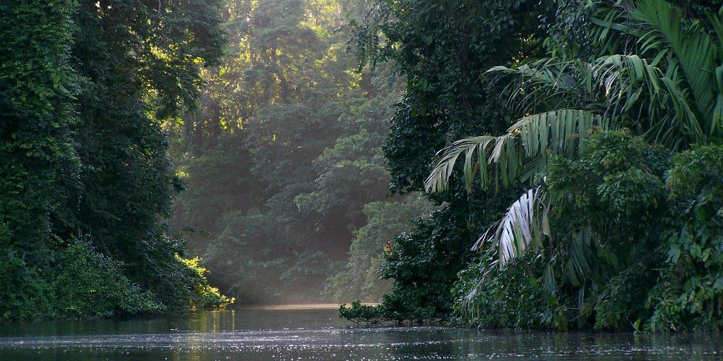 Tortuguero national park is a biodiversity hostpot, making it ideal for birdwatching lovers.