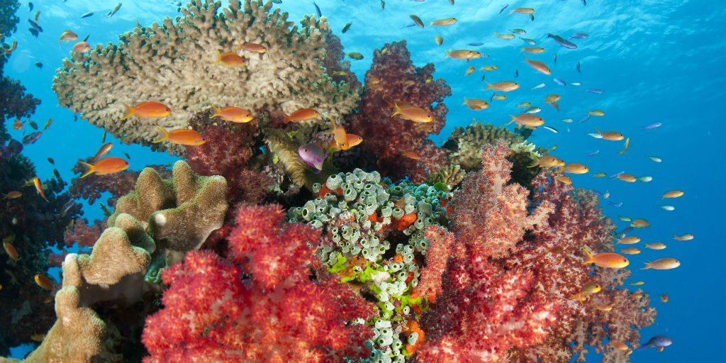 the tide's and waves forms, maintains, and breeds life into our coastlines creating a diver marine ecosystem.