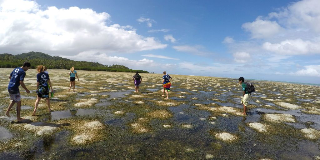 GVI Volunteers walk along the shore at low tide to assess the marine protected area.