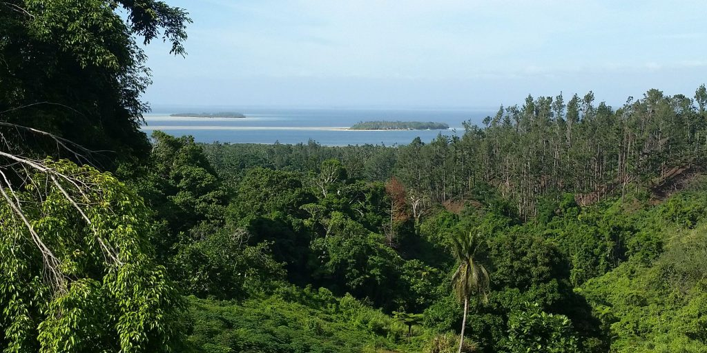 fiji volunteer trips also include adventures to the beautiful island forests.