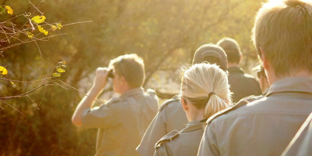 the GVI wildlife conservation internship in Limpopo is not just about the data but also tracking and understanding the animals behaviour.