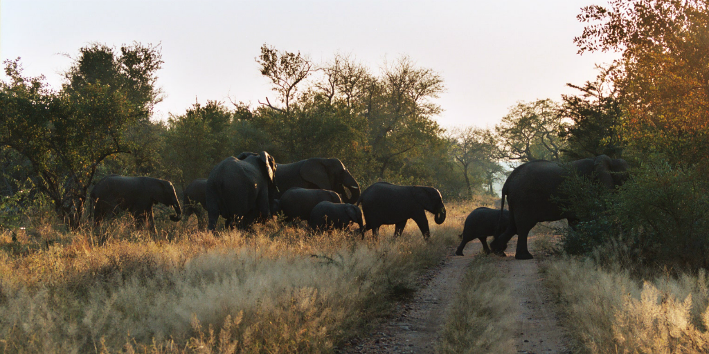 Volunteering in Limpopo South Africa gives you the opportunity to experience the amazing African bushveld