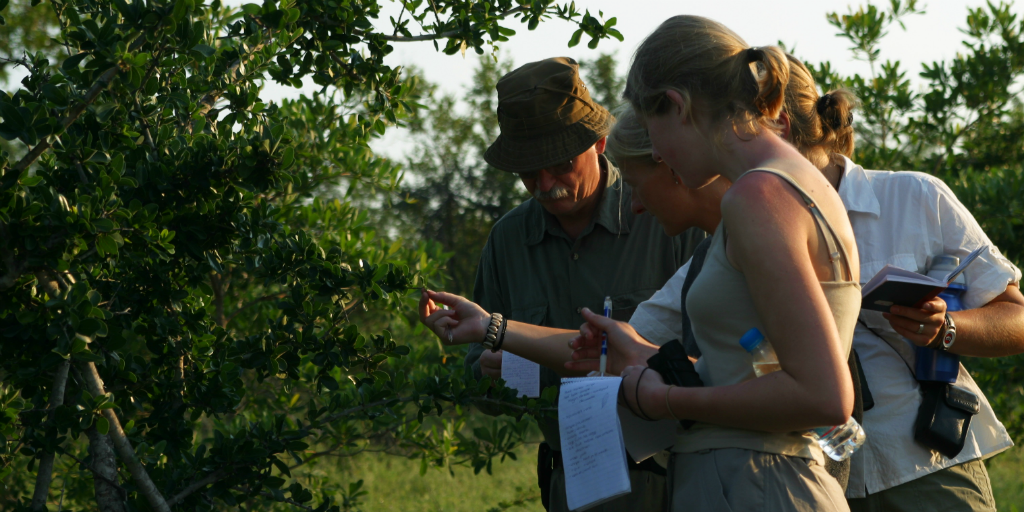 When you volunteer in Limpopo South Africa you learn wildlife conservation skills
