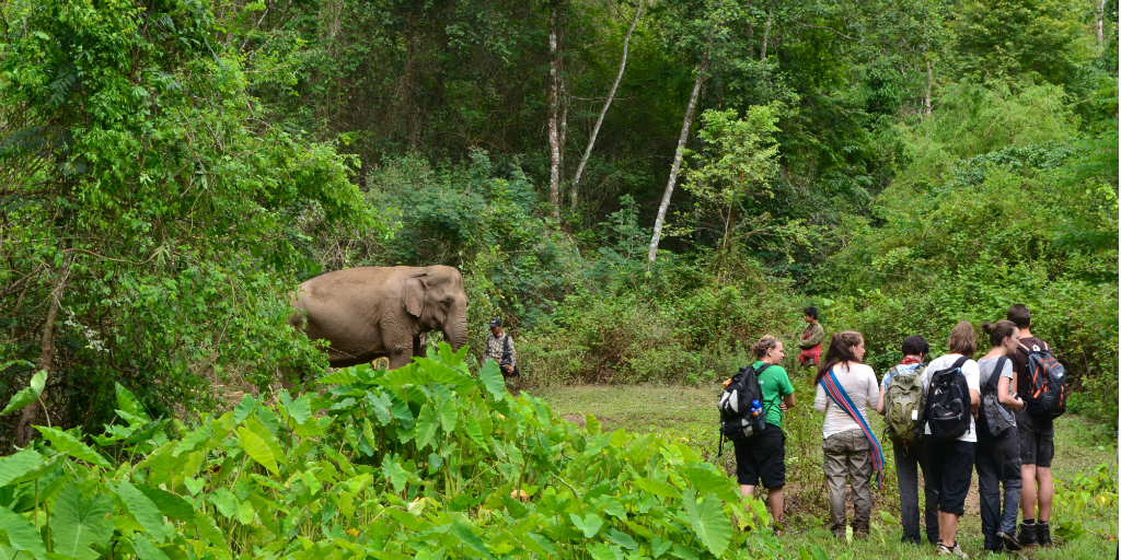 A group of volunteers surveying an elephant from a distance in Chiang Mai, Thailand.