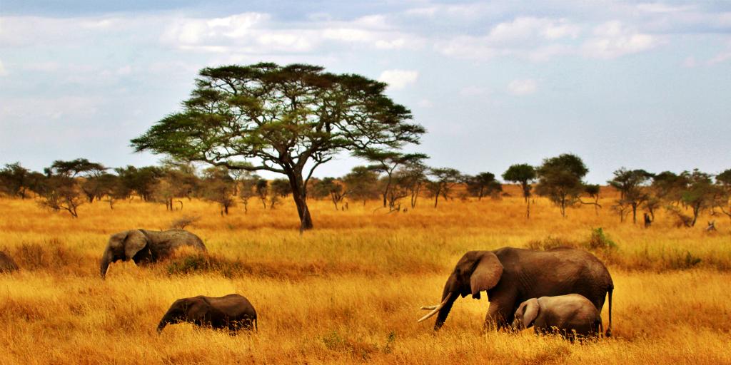 Types of volunteer opportunities include wildlife conservation.