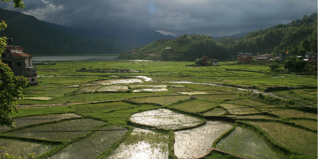 A rice paddy in Nepal with grey clouds looming overhead.