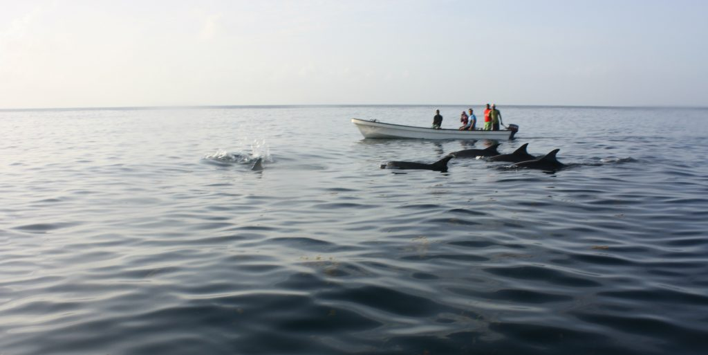 Volunteer in Africa with dolphins in Zanzibar.