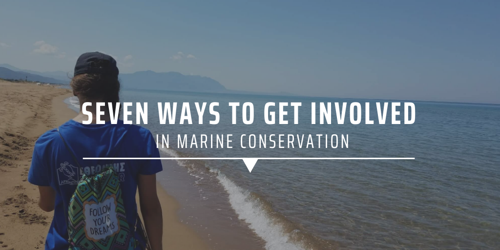 Seven ways to get involved in marine conservation