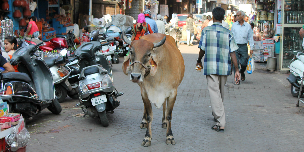 I saw animals and people interacting on my trip to India.