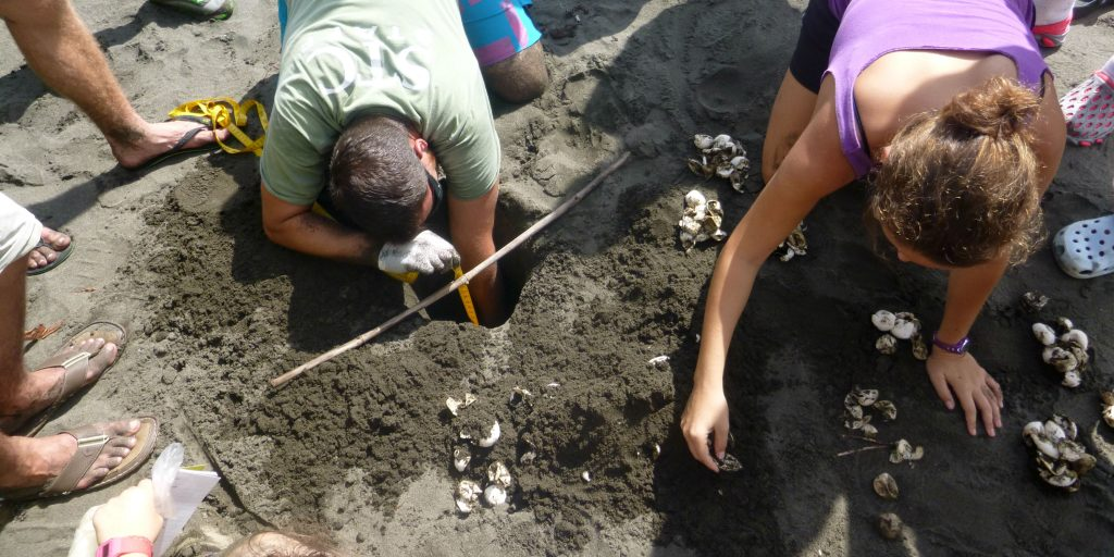Costa Rica volunteer trips involve valuable research toward wildlife conservation.