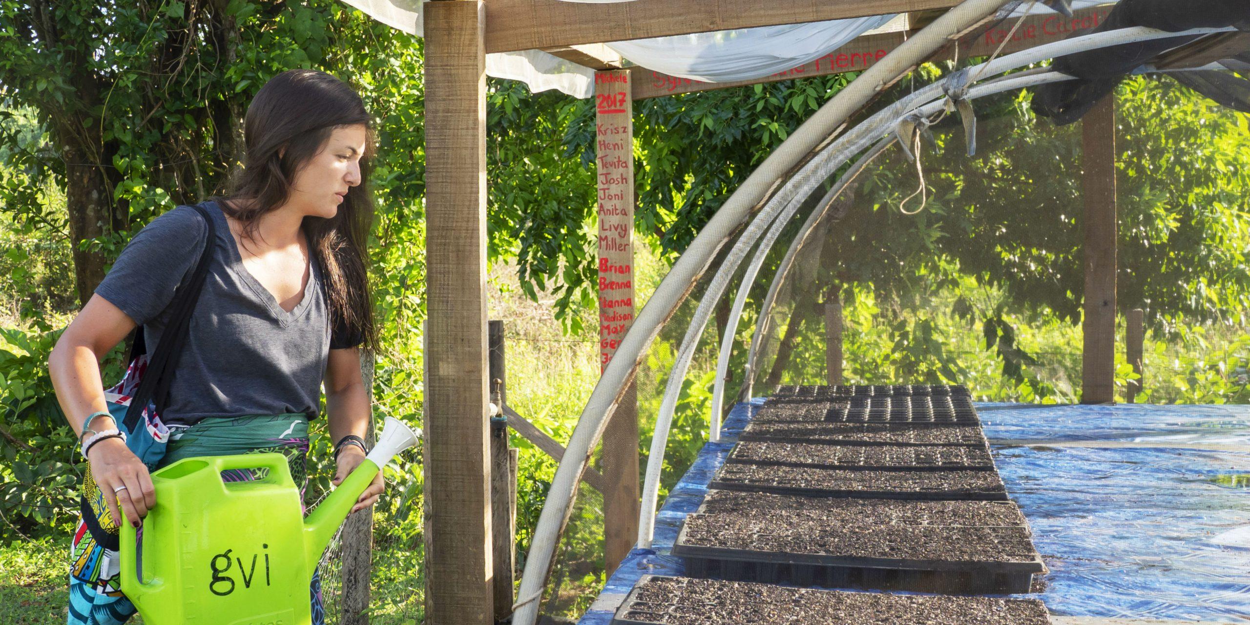 A GVI participant waters a vegetable garden in Fiji