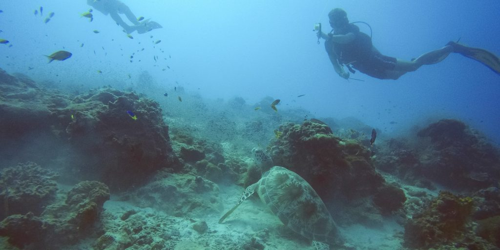 Go scuba diving on a marine conservation volunteer or internship program.